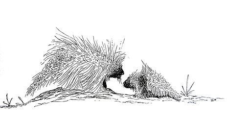 PorcupinesEdit1.jpg