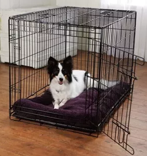 Crate Training- You'll be Happy you did