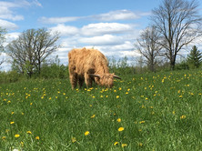 Lola in the pasture
