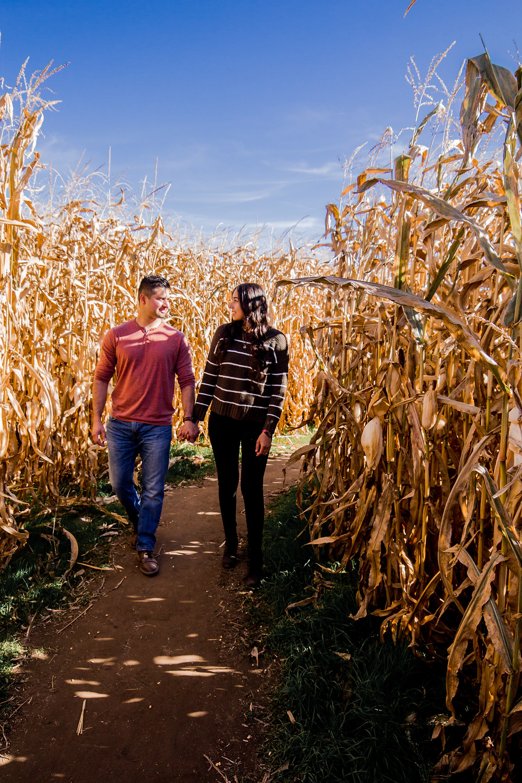 A romantic walk through the corn maze