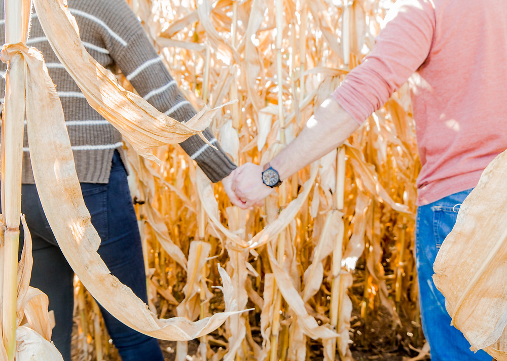 Holding hands in the corn field