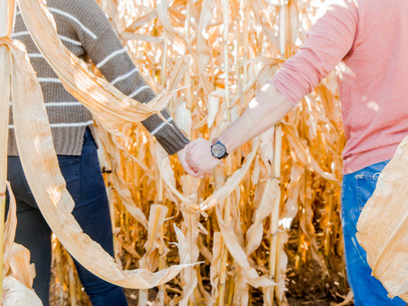 Why You Should Book Your Next Photo Session in a Pumpkin Patch