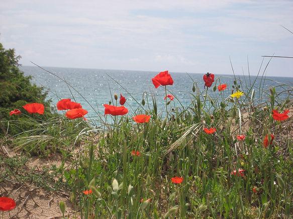 Ferien in Apulien - das schönste Ziel für ihren Urlaub