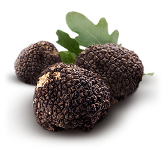 truffe-png-1.png