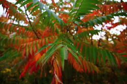 colored+leaves+2.jpg
