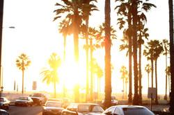sun+through+trees.jpg