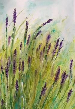 Adonna Lavender art thousand oaks