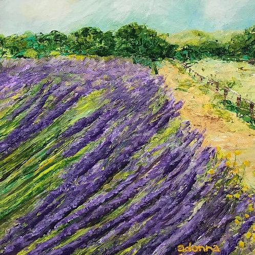 """Lavender Field"" Color Print 8"" x 8"""