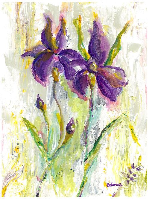 Purple Irises Color Print 8 x 10