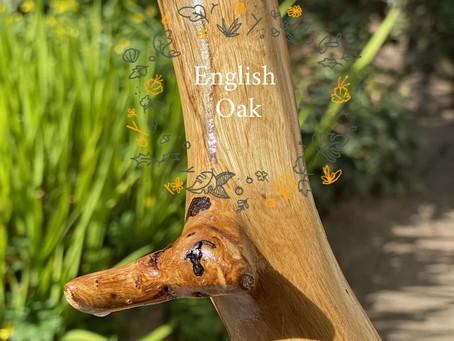 New English Oak Tall