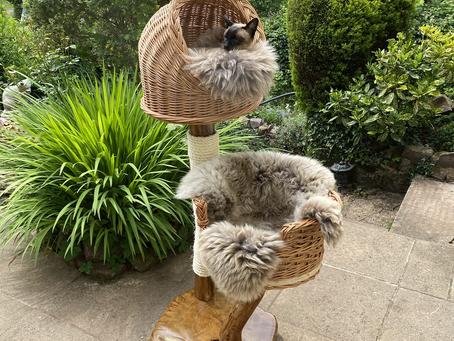 Exmoor Cat Tree