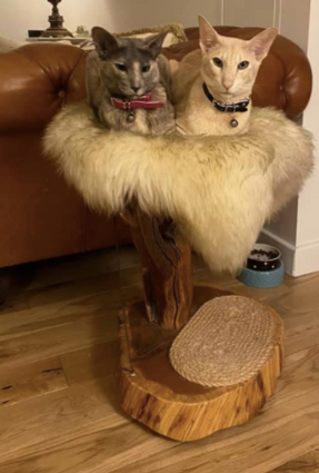 Lola & Ralph