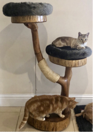 Angel & Ollie
