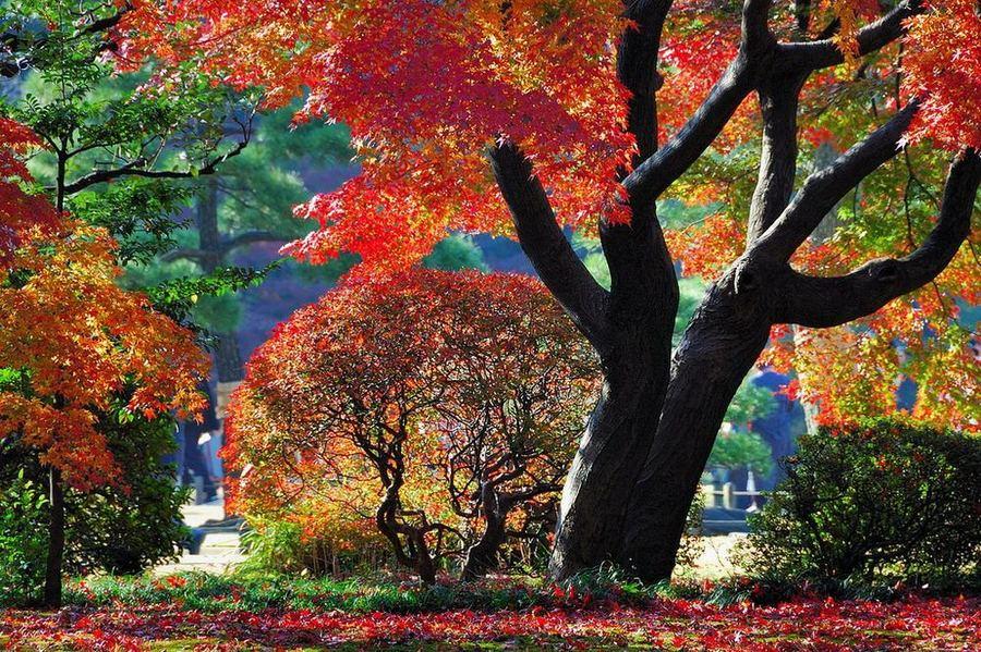 Rikugien Garden (六義園)