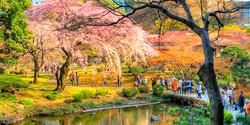 Koishikawa Korakuen Garden(小石川後楽園)