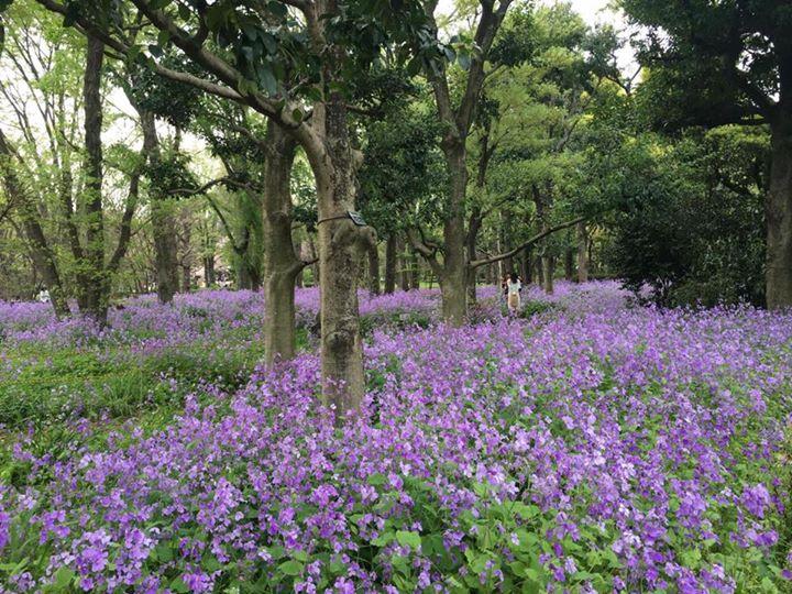 Kitanomaru Park (北の丸公園)