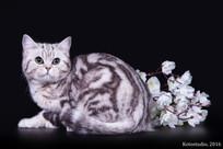 von Katzenheim Whithney
