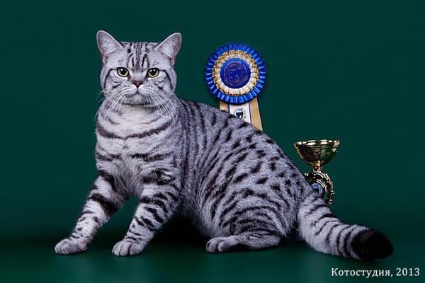 ICH.Triumph Silver Miracle Cats_RU&v.jpg