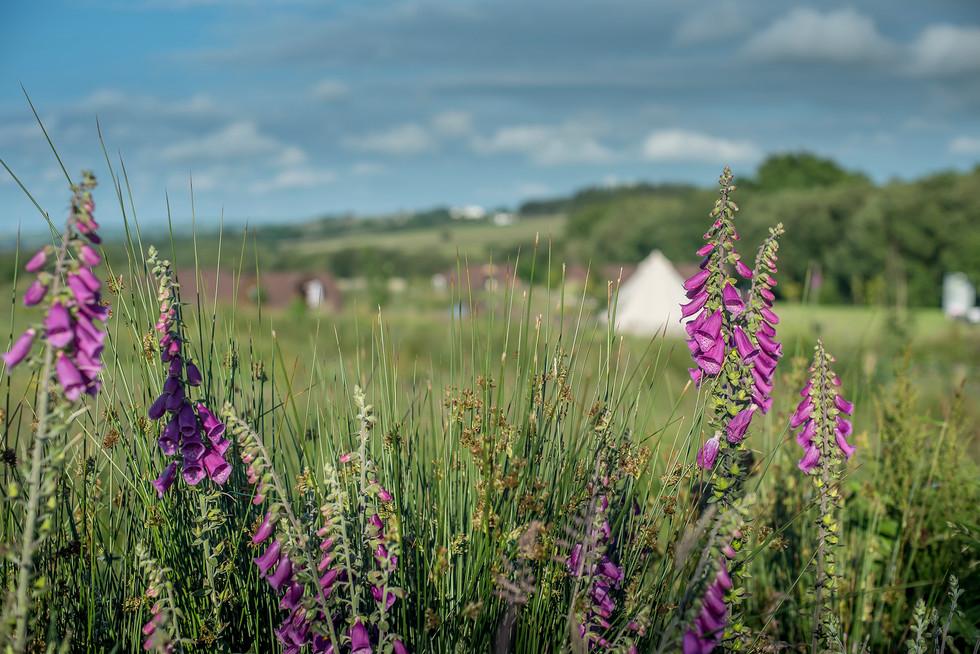 Maerdy Farm Cottages094.jpg