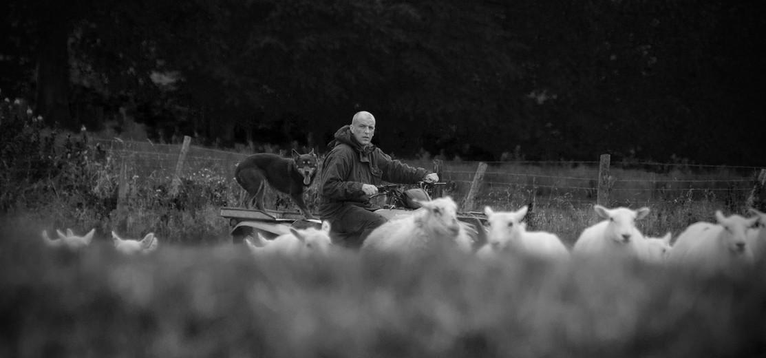 sheep and bike.jpg