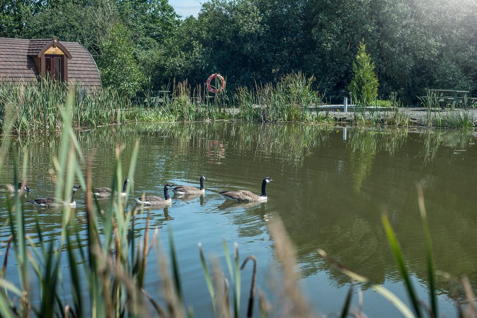 Maerdy Farm Cottages076.jpg