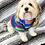 Thumbnail: Serape Dog Shirt