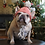 Thumbnail: Clay and Oatmeal Crocheted Dog Beanie with Pom Pom