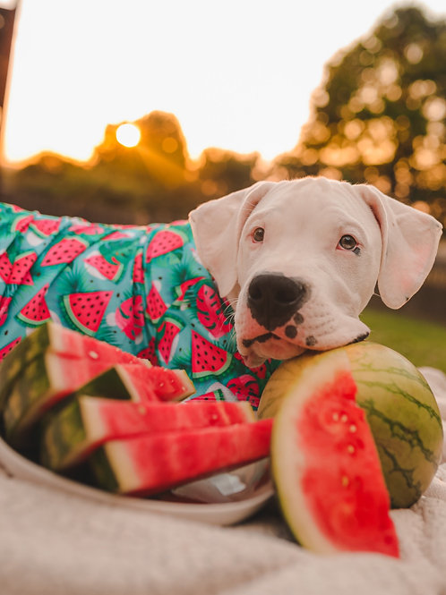 You're One in a Melon Mesh Dog Shirt