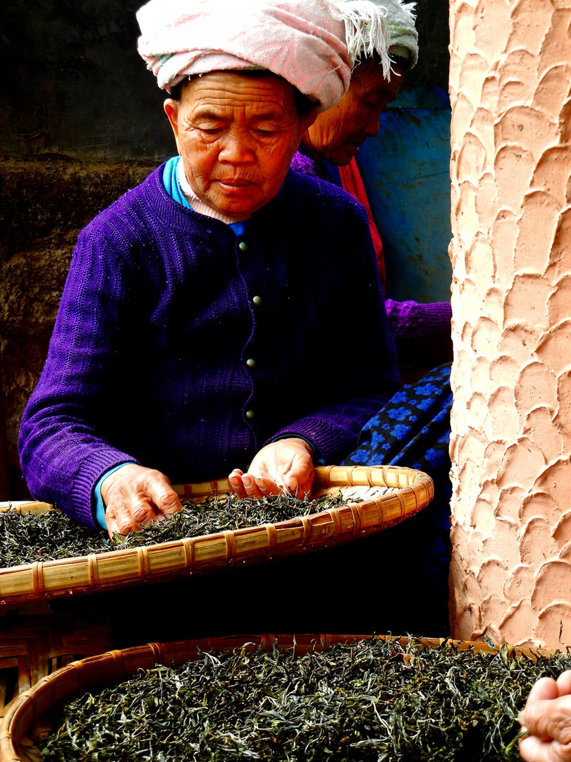 The Sort - Jing Mai, Xishuangbanna, Yunnan