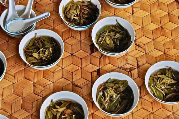 Tastings - Bulang Mountain, Yunnan