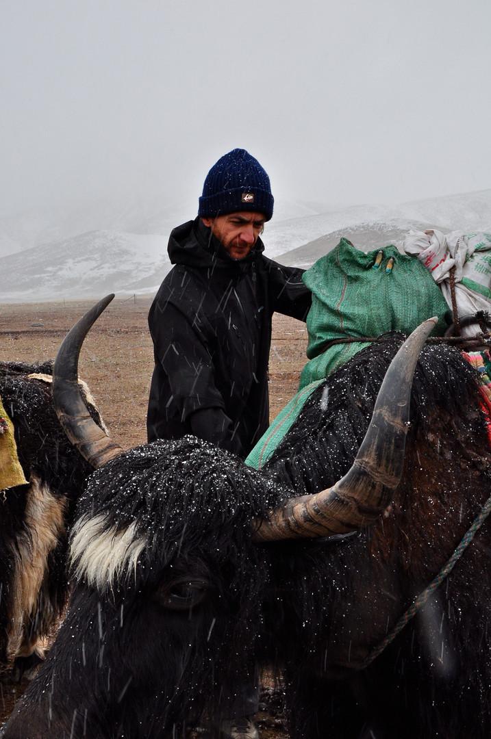 Michael Loads Yak - Amne Machin, Qinghai