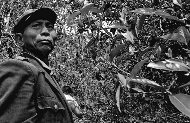 A Bulang elder amidst his sacred ancient tea trees near Lao Ma Er in the Bulang Mountains.