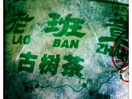 Lao Ban Zhang Pu erh – A Tea of Endurance