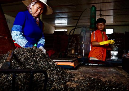 Dai Hands and Tea - Menghai, Yunnan