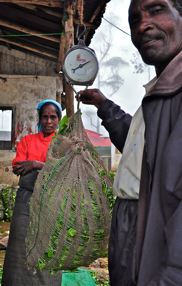 Tea 'Weight' - Sri Lanka