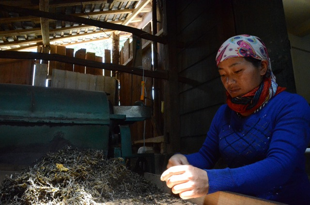 A local Bulang woman sorts a Spring harvest