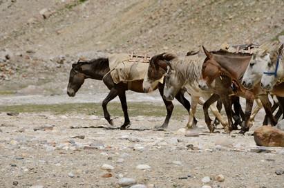 Phalanx - Bara Shigri, Himachal Pradesh