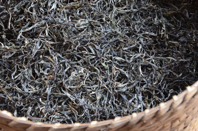 Freshly dried Bang Ma Puerh awaits our attentions. There are three 'levels' here, the top being 'one ancient tree harvest of leaves'.