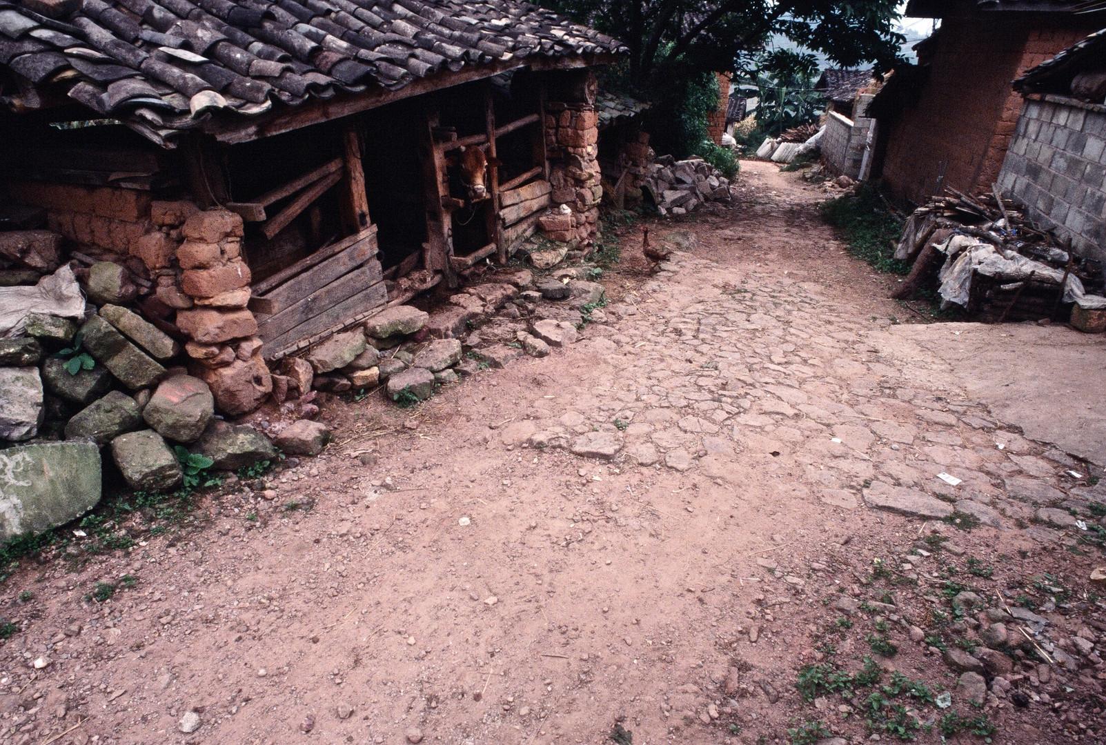 Tea Trail - Jingdong, Yunnan