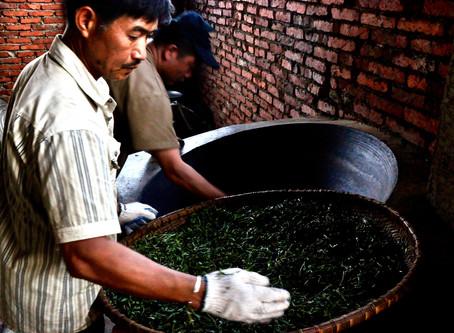 International Tea Day – Lao Banzhang Mentor