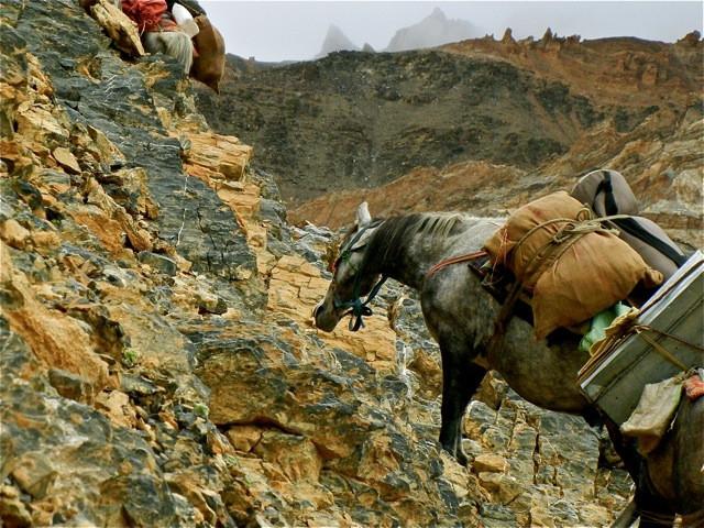 Mules are precious