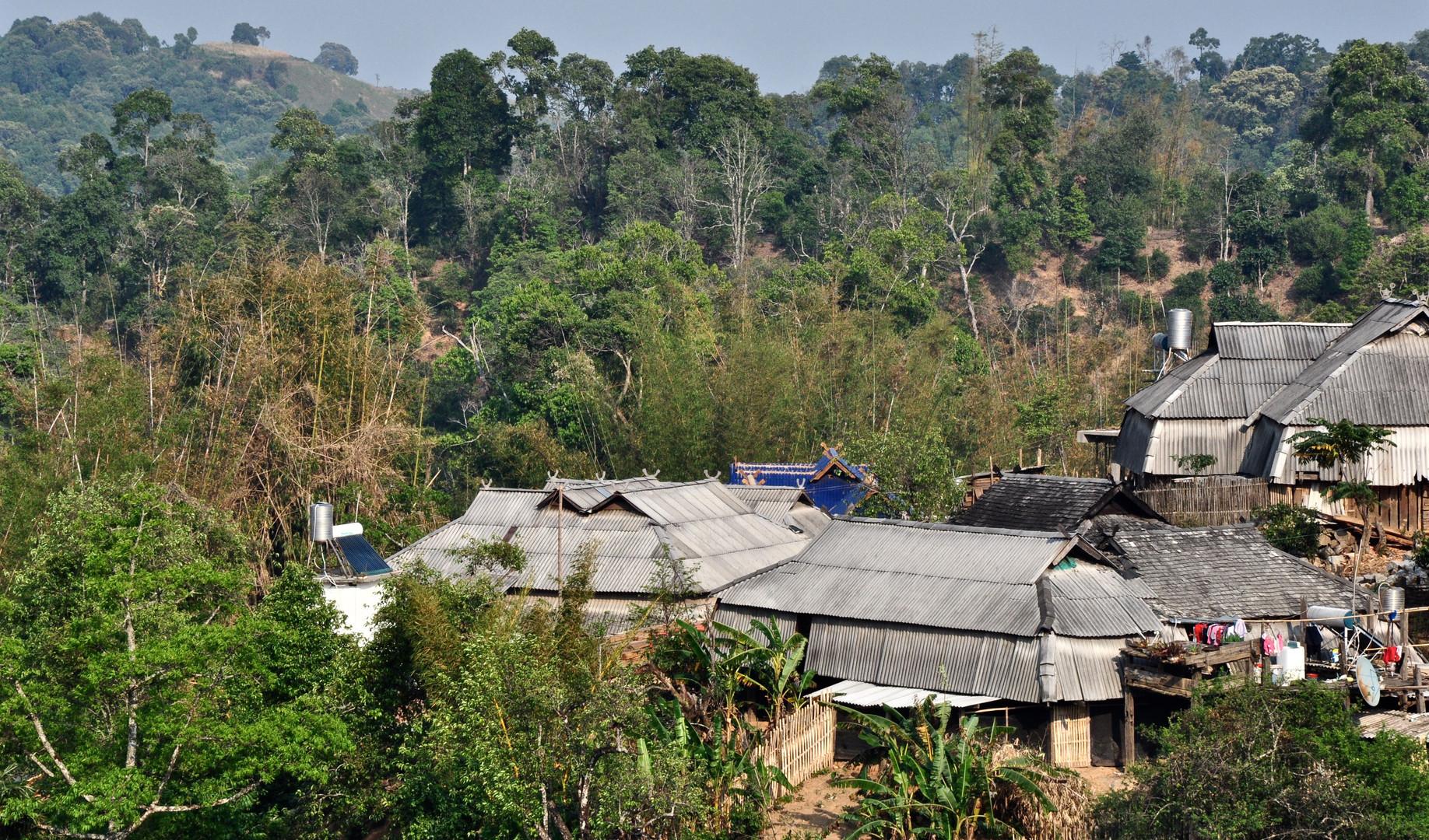 Puerh - Village Gold - Yunnan