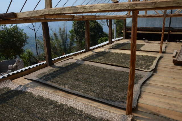 A wider view of heaven. Freshly fried tea leaves lie in a protected 'greenhouse'. One day of drying will suffice for these beauties