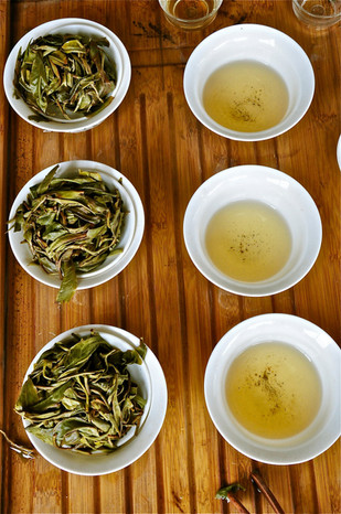Tasting - Sheng Puerhs in Lao Banzhang