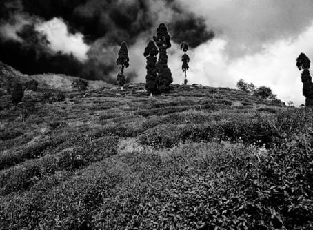 Darjeeling Chronicles (2 of 2) – Jungpana