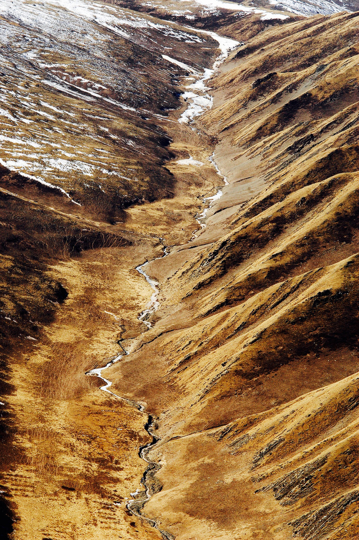 Spine Wolf Country - Golog, Qinghai