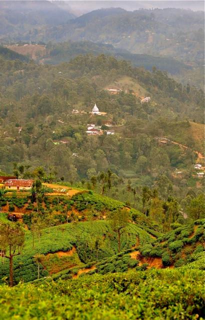 Sri Lanka Tea Tour - Jeff Fuchs