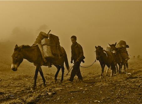 The 'Tea' of the Tea Horse Road