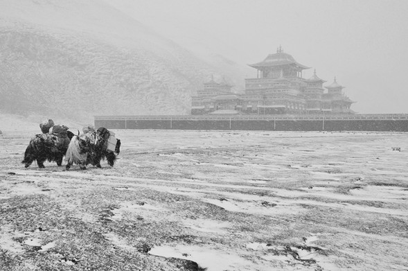 Snow More - Amne Machin, Qinghai