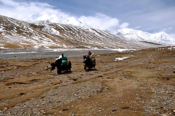 Westward - Amne Machin, Qinghai